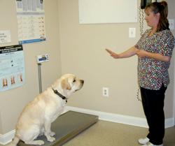 Lisa teaching Gibbs stay