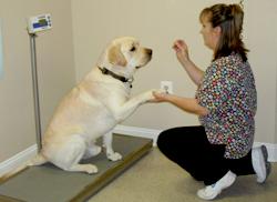 Metuchen Veterinary Hospital